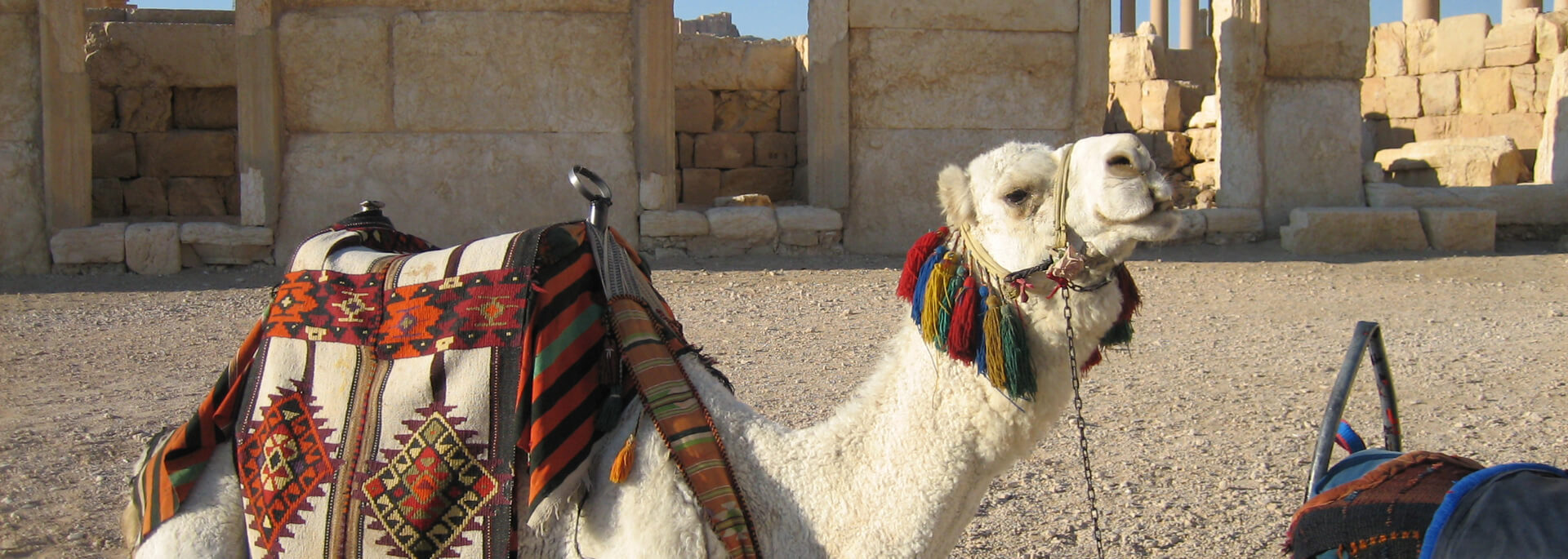 Wie ich mit Casanova durch Palmyras Prachtstraße ritt