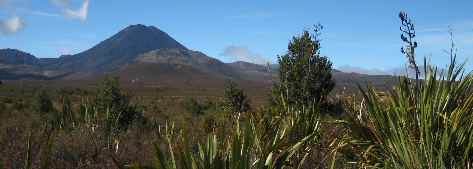 Wie ich Neuseelands Nordinsel als Mittelerde bereiste