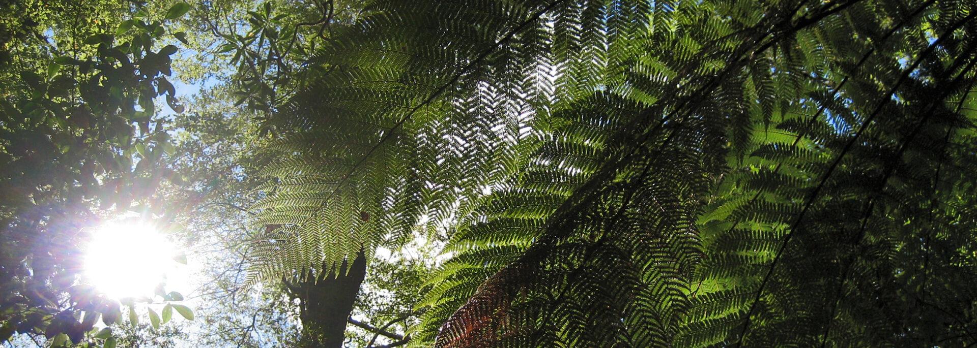 Wie ich mich in Neuseelands verwunschene Wälder, Fjorde und kleine Blaue verliebte