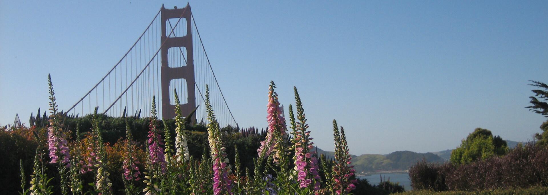 Ohne Blüten im Haar über die Golden Gate Bridge