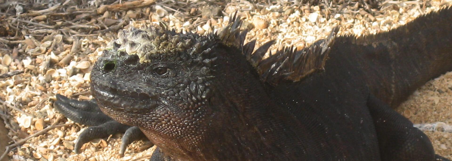Wie ich in Flip-Flops Tölpel, Echsen, Seelöwen und Kaktusbäume sah