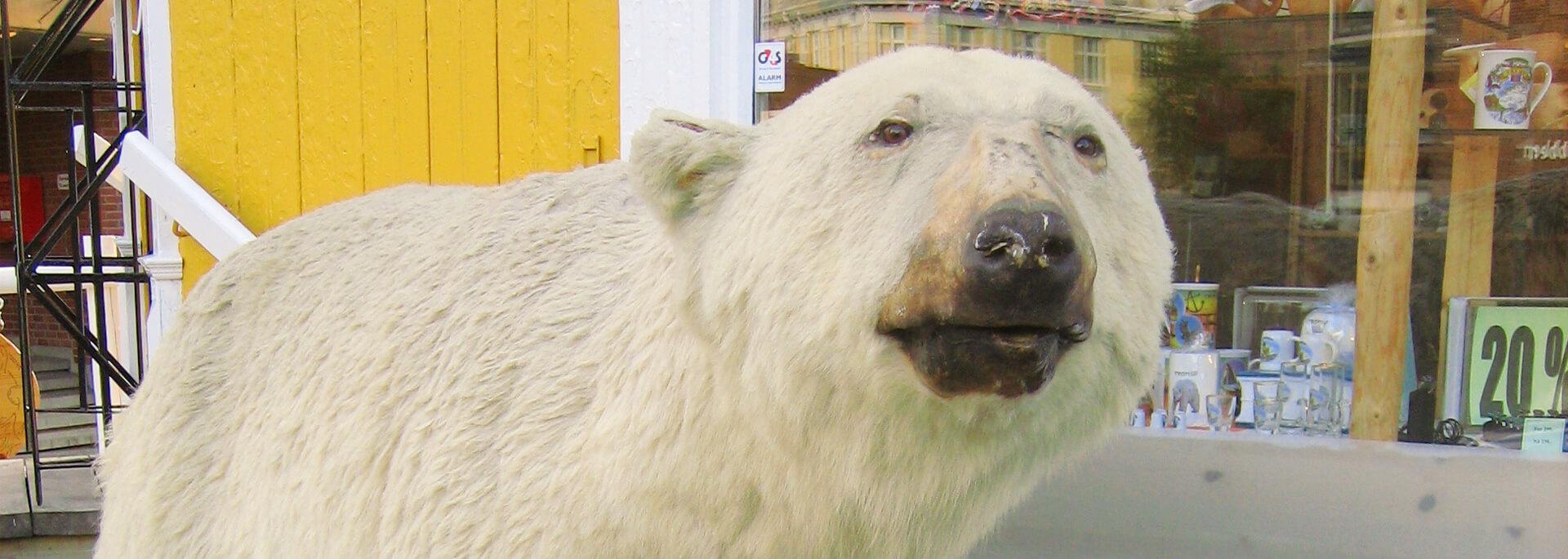 Wie ich trotz Hurtigruten nicht mehr bis Spitzbergen kam
