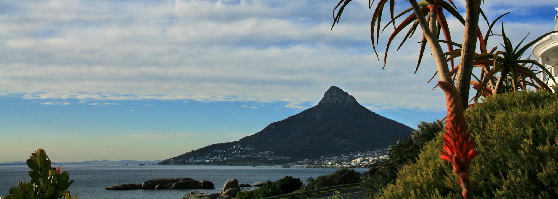 Wie ich Kapstadts Pinguine knuddelte und morgens um 10 Brut trank