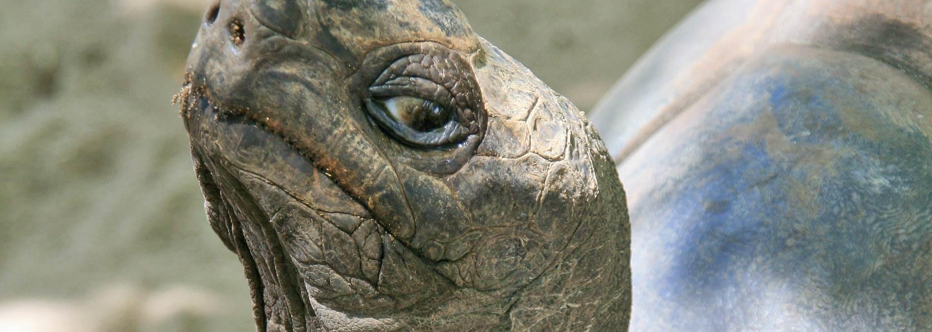 Fotos: Riesenschildkröten auf den Seychellen