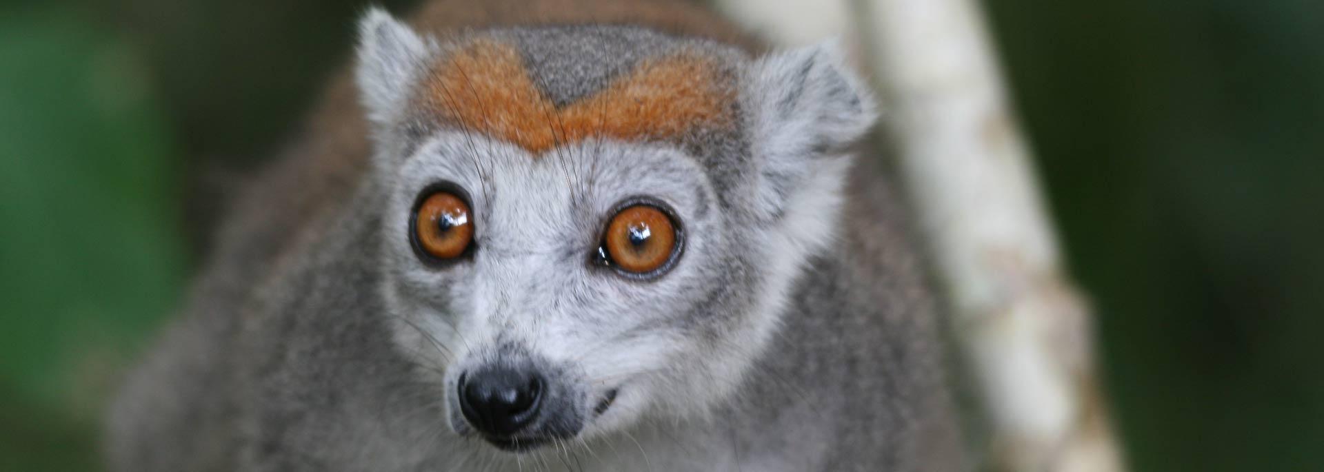 Fotos: Madagaskars Lemuren