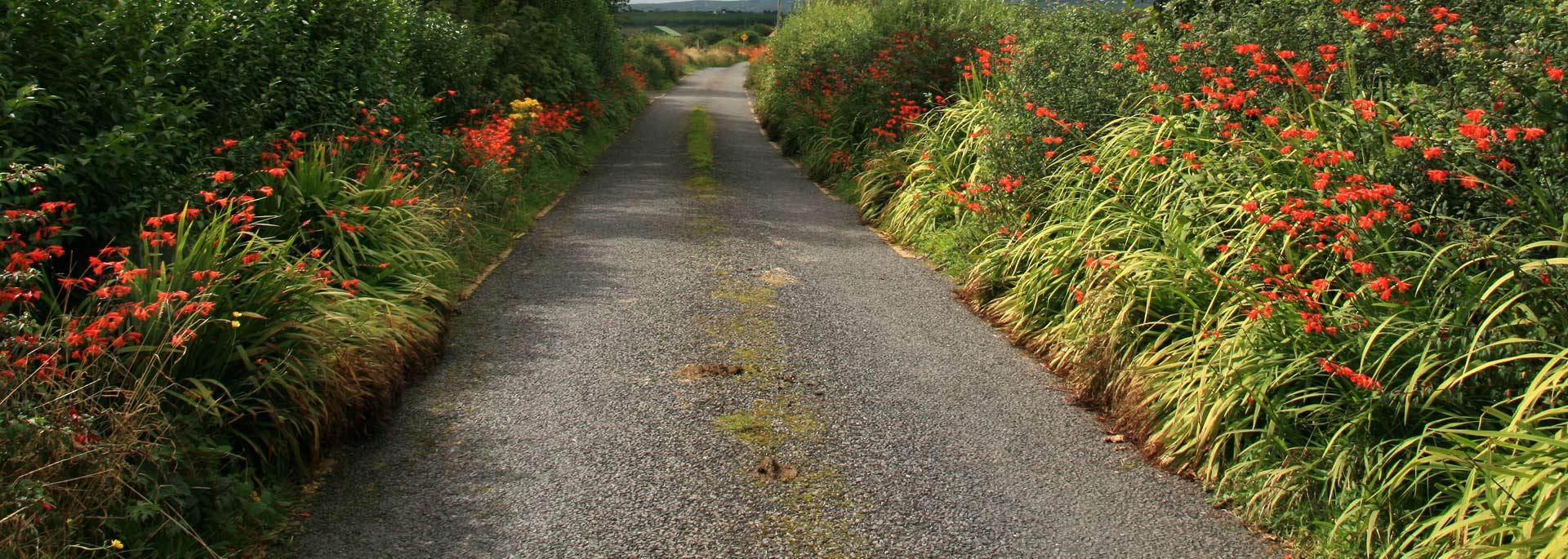 Irland-Roadtrip: Wo die Schafe nicht mehr gondeln