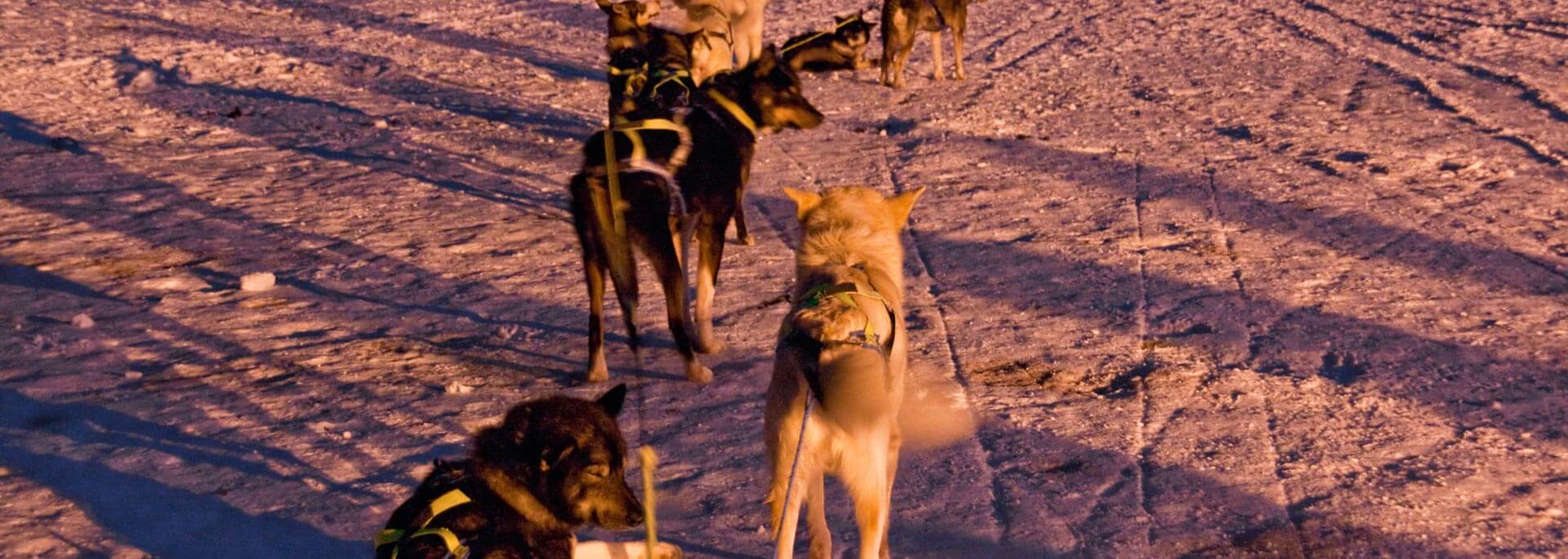 Reisetipp: Hundeschlittenfahrt in Nordnorwegen