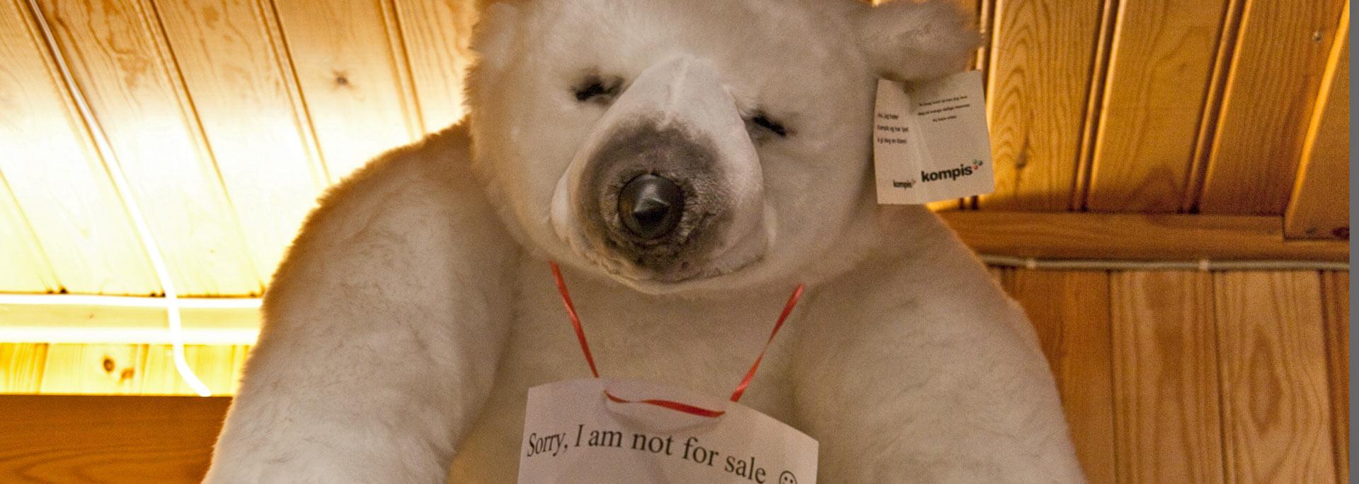 Wie ich in Tromsö auf Nordlichtjagd einem Eisbären in die Fänge ging