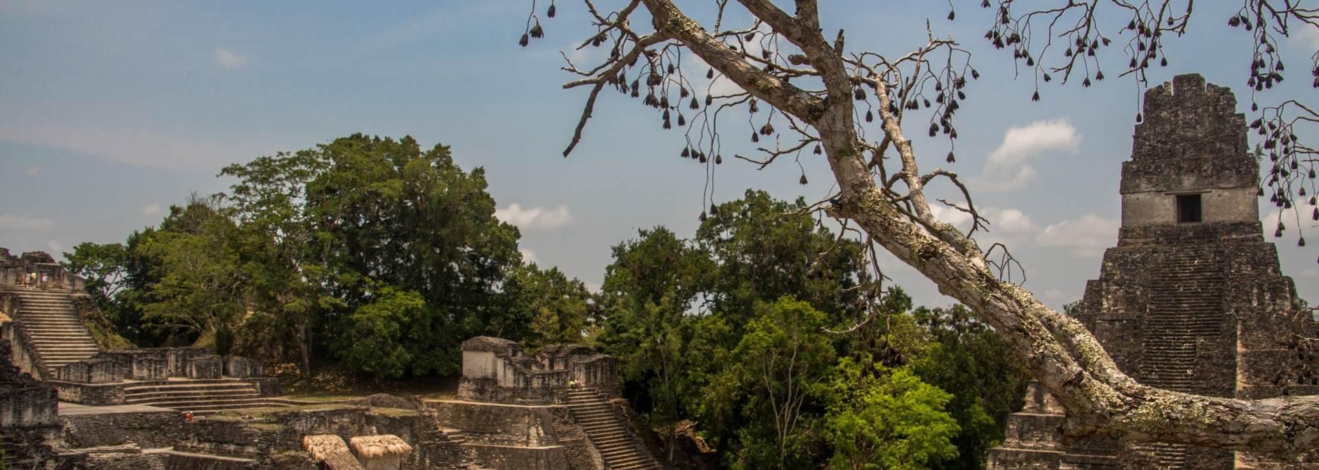 Reisetipp: Tikal – Guatemalas größte Mayastätte