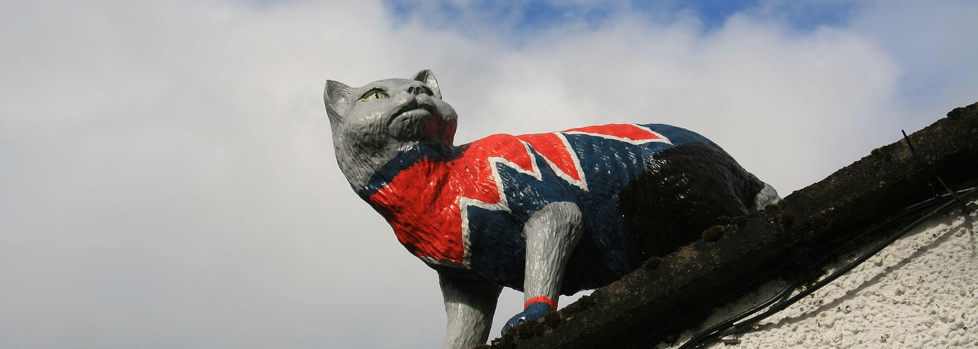 Fotos:  Wildkatzen in Schottland