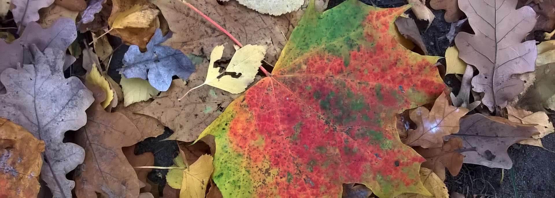 Wie mich der Herbst nach Moabit wehte