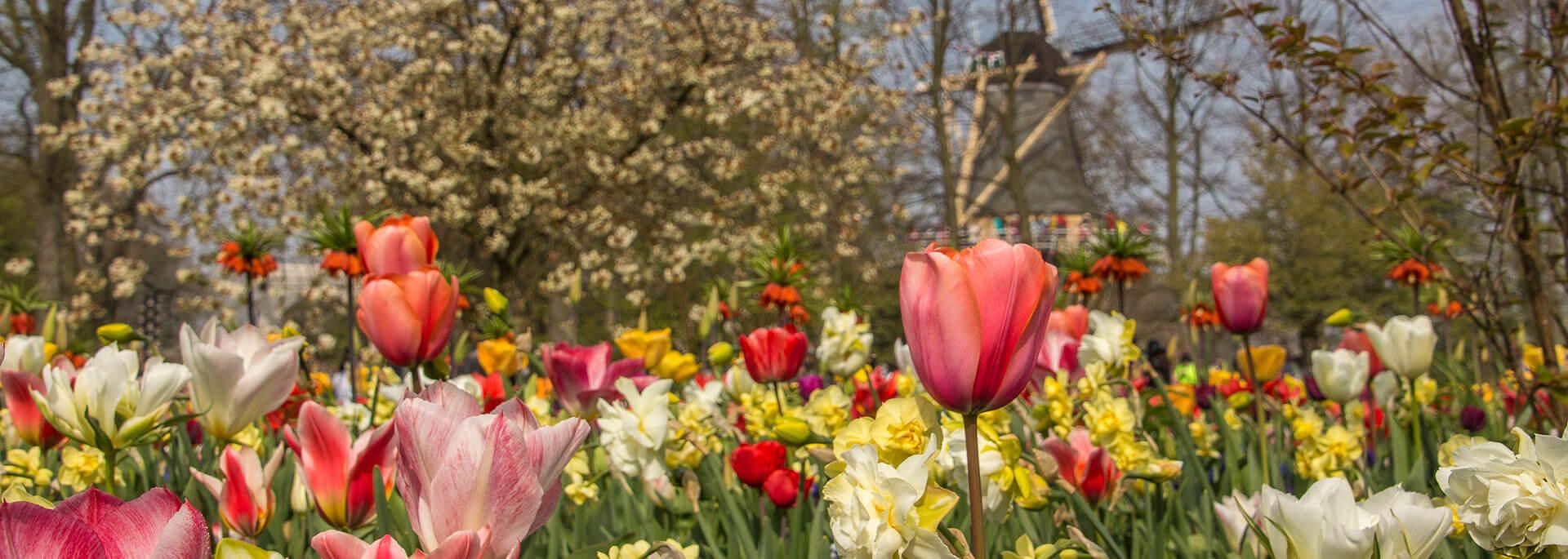 Reisetipp Holland: Im Keukenhof in Tulpen baden