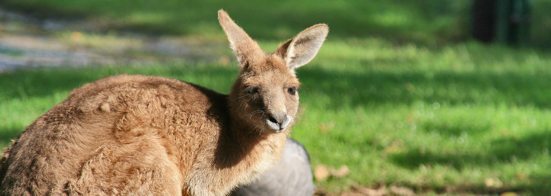 Der wilden Westen Australiens – Vorbereitungen