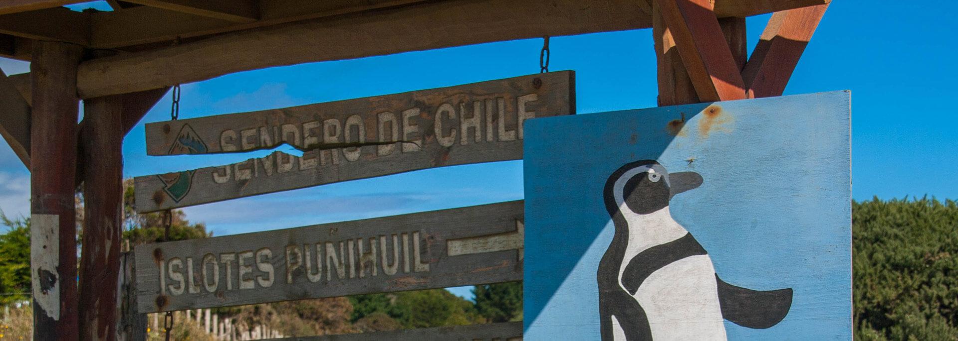 Chiloés Pinguinkolonie vor Puñihuil